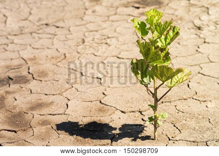 The efforts of the trees growing on the land amid the drought.