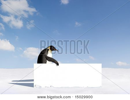 Penguin holding a blank sign
