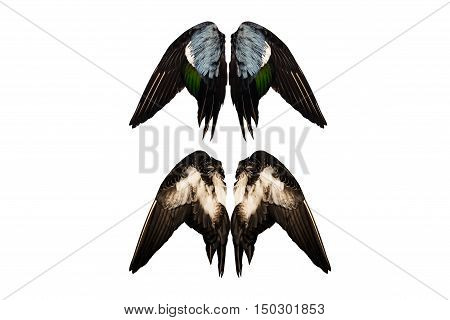 Clipped real duck wings on white background isolated back front angel four two pairs