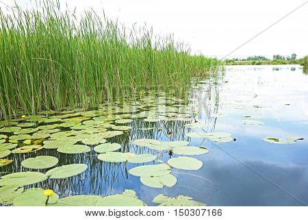 Beautiful river landscape with waterlilies on water