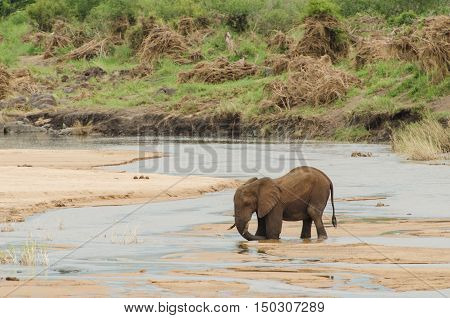 Elephant Stuck In River
