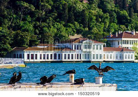 Cormorant enjoying the sun on the Bosphorus, Istanbul