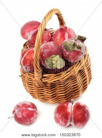 Delicious Fresh Frozen Red Plums with Leafs in Wicker Basket isolated on White background