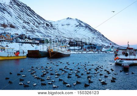 Siglufjordur harbor with fishing boats at dawn in winter.  Siglufjordur  a small fishing town in a narrow fjord on the northern coast of Iceland.