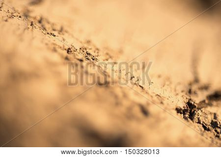 Ground Texture Close Up Selective Focus and Shallow Depth of Field. Abstract Nature Background.