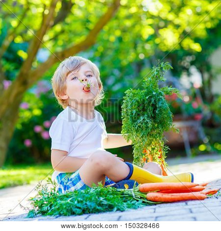 Blond smiling kid boy eating and picking carrots in domestic garden. child gardening outdoors. Healthy organic vegetables as snack for kids and kindergarten children