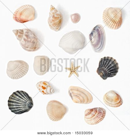 various color shell isolated on white