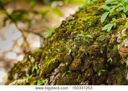 Tree laden with moss and orchid, blur background.
