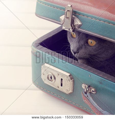 Cat hiding in ambush inside the shabby retro suitcase / game of hide and seek