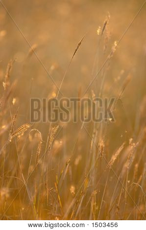 Dried Herbs On The Field