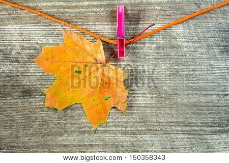 Single maple dry leaf hanging on rope with clothes-peg