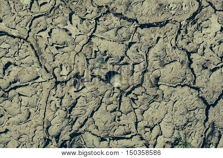 Dry Soil With Cracked Surface And Shell