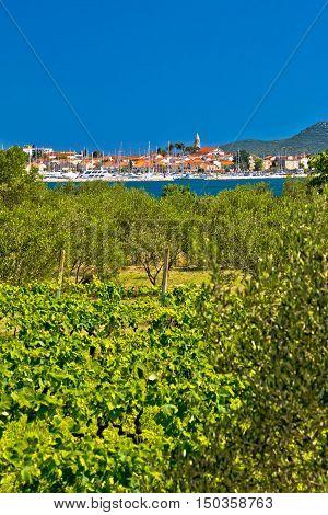 Biograd Na Moru vineyards and olive trees vertical view Dalmatia Croatia