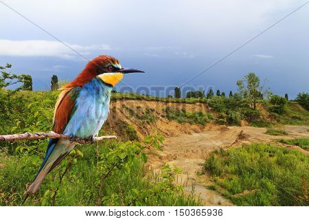 European bee-eater in the interior, beautiful sandy career home to European bee eaters, blue sky, green grass