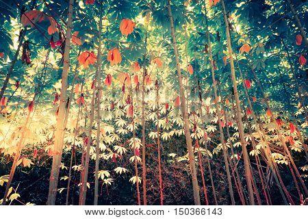 Surreal colors of fantasy tropical jungle plants with sun shining through dense vegetation