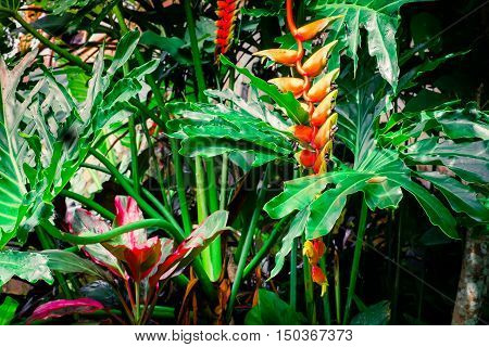 Amazing tropical plants and flowers in fantasy rainforest
