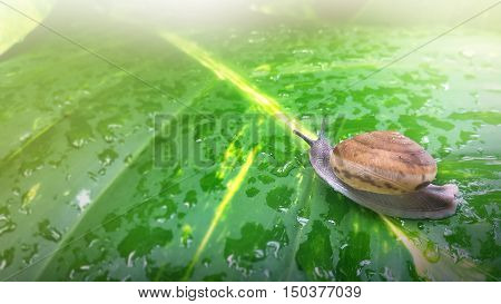 Snail Shell In Nature Background