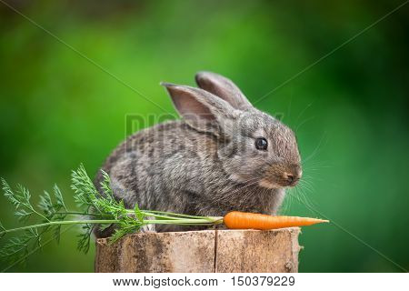 Baby rabbit bunny on stud whith carrot agaist green bokeh background