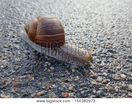 Great and the usual snail creeps on asphalt