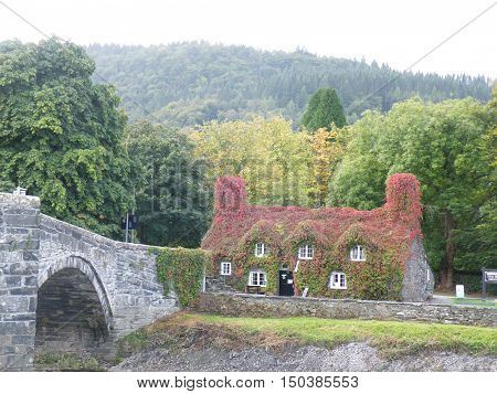 Welsh tea room, covered in Virginia creeper, showing Autumn or Fall colors.
