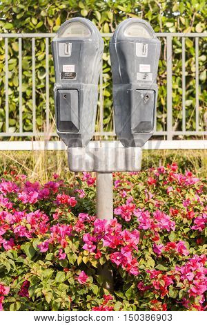 Parking meters surrounded by pink flowers in Florida