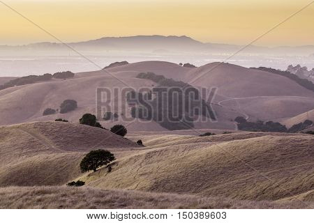 California Golden Hills. California Landscape of Oak trees scattered among the beautiful golden hills of the East Bay in Alameda County.