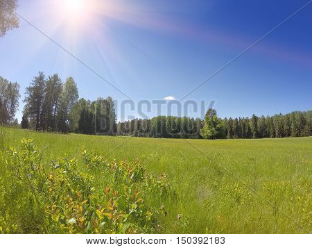Beautiful bright summer landscape in a sunny day
