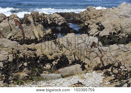 This is an image of rocks and tide pools along the coast of Pacific Grove, California.
