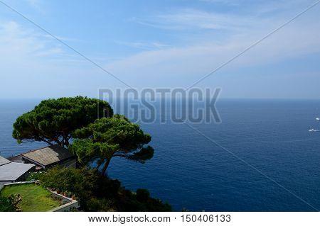 Tree high over sea in Riomaggiore in Liguria Italy. One of five Cinque Terre cities (unesco world heritage)