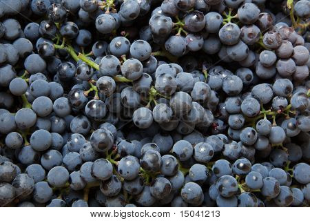 background from blue grape