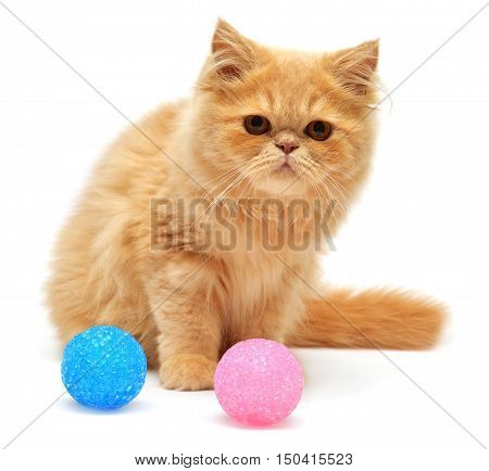 Beautiful kitten sitting with balls isolated on white background. Persian cat