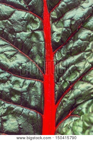 bright abstract background of green leaf with red veins