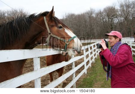 Photographer And Horse 001