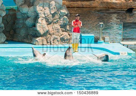 An Unidentified Man Trainer Is Showing Dolphins As They Perform Tricks In Front Of Happy Crowds.