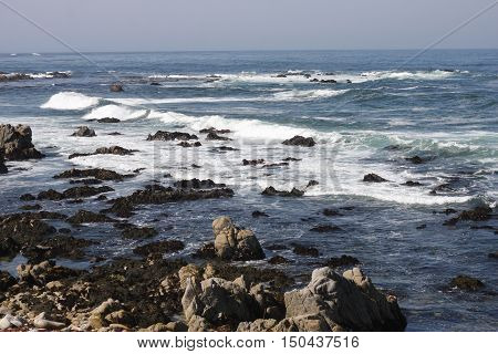 This is an image of the rocky coastline of Pacific Grove, California taken at low tide.