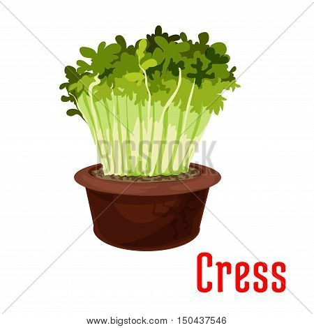 Fresh garden cress isolated cartoon icon. Green sprouts of cress salad in flower pot for vegetarian food, salad recipe, healthy food design
