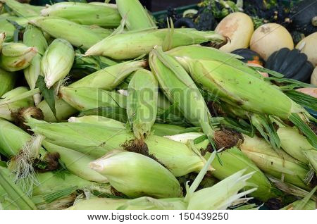 Fresh sweet corn for sale at the farm market