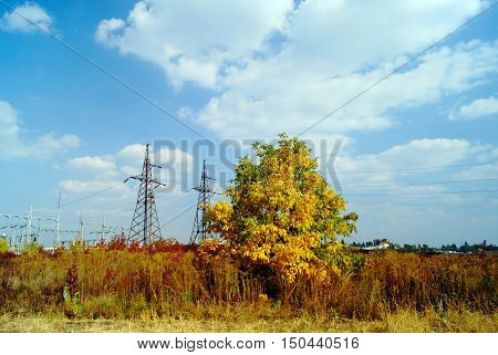 Autumn landscape with yellow tree and powerline towers near electrical substation