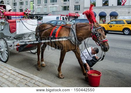 Brown Horse And Red Bucket On Central Park