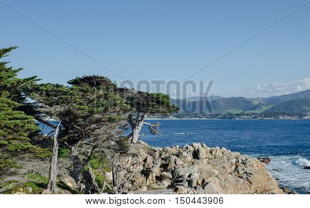 The Lone Cypress, seen from the 17 Mile Drive in Pebble Beach of Monterey Peninsula. California. USA