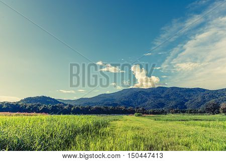 Beauty Sunny Day On The Rice Field With Sky And Mountain In Background.