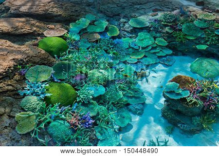 Beautiful Coral In Underwater With Colorful Fish.