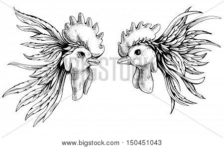 Fighting Rooster Images, Stock Photos & Illustrations ...