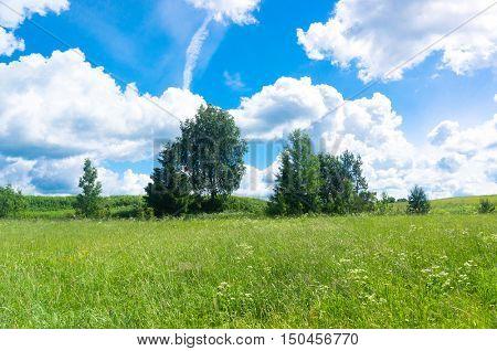 Grass Lawn Scenic View