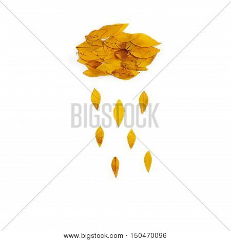 Yellow leaves arranged in cloud with rain shape on white background. Flat lay top view. Autumn composition of Platycodon grandiflorus