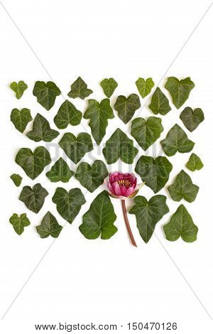 Creative arrangement of dogwood green leaves (cornus alba) and nymphaea waterlily purple flower on white background. Flat lay top view.