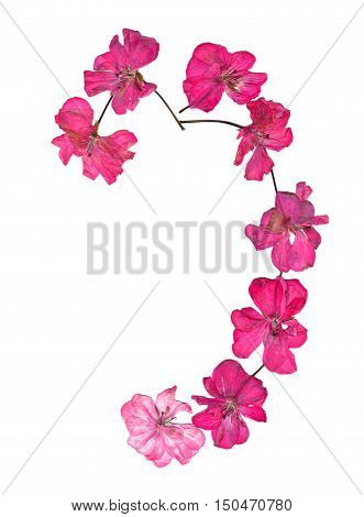 Isolated wave line pink geranium collection of elements application of dried pressing bright flowers set for your design on a white background