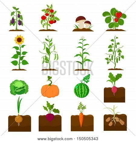 Farm plant icons set. Farm organic food, garden collection icon in cartoon style. Farm fruit and vegetables. Another farm and agriculture plant symbol.