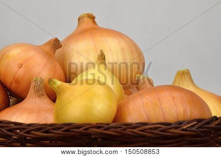 Onions in a wicker bowl. Onion. White backgroung.