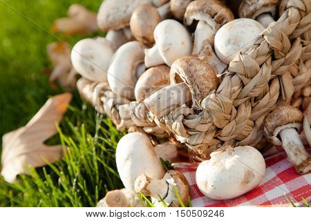 Champignons and Crimini Mushrooms in Basket on the Green Grass